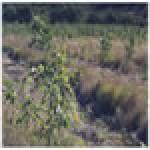 Wyaralong Dam Vegetation Offset Planting Works and Biocondition monitoring