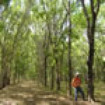 Forestry plantation assessment study:  Management options and mine closure criteria